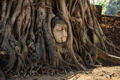 Buddha przewodzi porosłego drzewnymi korzeniami w Wacie Mahathat, Ayutthaya, Tajlandia Obraz Royalty Free