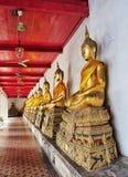 Buddha rząd Obraz Royalty Free
