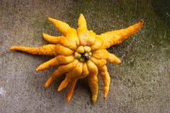 Buddha's hand fruit Stock Image