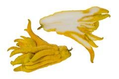 Buddha`s Hand Fruit Royalty Free Stock Photo