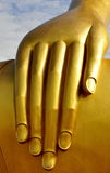 Buddha's hand Royalty Free Stock Image