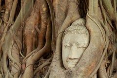 Buddha's head. Head of a buddha in the tree at ayutthaya, Thailand Stock Photo