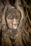 Buddha's head in banyan tree roots Stock Photos