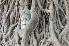 Buddha's head is embedded in tree roots, a beautiful ancient Royalty Free Stock Photos