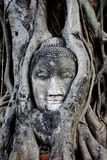 Buddha's head is embedded in tree roots, a beautiful ancient sit Royalty Free Stock Image