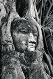 Buddha's head is embedded in tree roots, a beautiful ancient sit Stock Photography