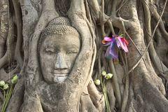 Buddha's head entangled in trees, Ayuthaya Stock Photography