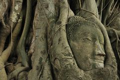 Buddha's head inside the root tree at Ayutthaya 2 Royalty Free Stock Photography