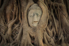 The Buddha s head in tree root. One of  Unseen Thailand at Wat Phra that,Ayutthaya, Thailand Royalty Free Stock Images