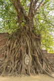 The Buddha s head in tree root. One of  Unseen Thailand at Wat Phra that,Ayutthaya, Thailand Stock Image