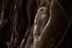 Buddha's head in tree roots Stock Photos