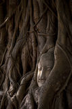 Buddha's head in tree roots Stock Images
