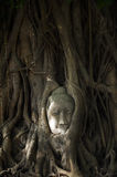 Buddha's head in tree roots Royalty Free Stock Photography