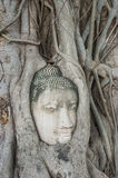 Buddha 's head in the tree roots Royalty Free Stock Photography