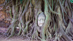 Buddha's head in tree roots. At the temple named Wat Mahathat in Ayutthaya, Thailand. It is in is a Unesco World Heritage Site Royalty Free Stock Images