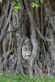 Buddha& x27; s twarz w?rodku drzewa zdjęcie stock