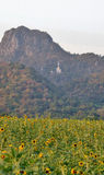 Sunflower field valley and big white Buddha Sculpture in the hill Stock Photo