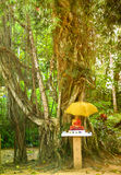 A Buddha shrine under a Bothi tree Royalty Free Stock Photography