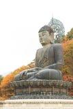 Buddha in the Sinheungsa Temple at Seoraksan National Park Royalty Free Stock Image