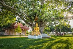 The Buddha sits under the Bodhi tree. Stock Photos