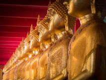 Buddha Sitting in Meditation Arranged. Golden Buddha Sitting in Meditation Arranged in a Row royalty free stock photo