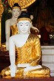 Buddha skulptur, Shwedagon Pagoda, Myanmar Arkivfoton