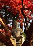 Buddha som mediterar under höstsidor, Kyoto Japan royaltyfria foton