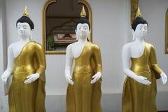 Buddha som tillsammans står Royaltyfri Fotografi