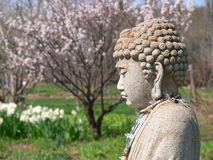 Buddha: spring garden. Stone Buddha in spring garden with blossom tree and daffodils Stock Photo