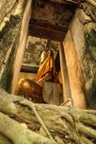 Buddha Statue in thai church covered by banyan roots Royalty Free Stock Images