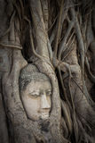 Buddha statue and ancient ruin. Stock Image