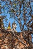 Buddha of statue in Ayutthaya Thailand Asia Royalty Free Stock Image