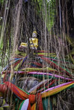 Buddha statue on banyan tree with colorful ropes Royalty Free Stock Image