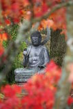 A buddha statue at batsford arboretum through red leaves Stock Image