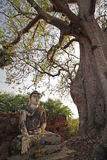 Buddha statue and big tree in Inwa stock photography