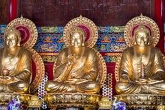 Buddha statue chinese style. Stock Image