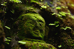 Buddha statue covered by moss in ancient temple Stock Images