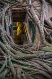 Buddha-Statue durch das Baumfenster Stockfotografie