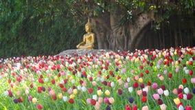 Buddha-Statue in einem Tulpenfeld, Chiang Mai, Thailand Lizenzfreies Stockfoto