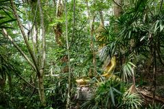 Buddha statue in forest, deep meditation in jungle, peace and nature Royalty Free Stock Photography