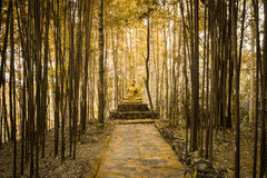 Buddha statue in forest. Stock Photo