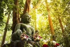Buddha statue. Green Jade Buddha statue in forest with warm light stock images