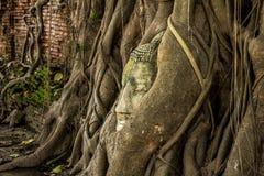 Buddha statue Head in Tree3 Royalty Free Stock Image