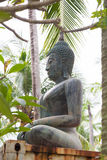 Buddha statue in the jungle Stock Photography
