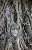 Buddha statue with roots surround, Thailand Royalty Free Stock Image
