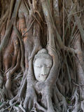 Buddha statue in the roots of tree Stock Photo