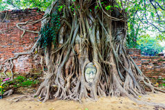 Buddha statue in the roots of tree at Thailand Royalty Free Stock Image