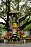 Buddha statue in vietnam royalty free stock image