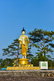 Buddha statue Stand. Out door Pine tree background Stock Image