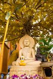 Buddha statue. In Thailand. Under the Bodhi tree Royalty Free Stock Photos
